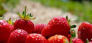 juicy strawberries, ripe from harvest